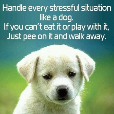 Handle-every-stressful-situation-like-a-dog.-If-you-cant-eat-it-or-play-with-it-just-pee-on-it-and-walk-away