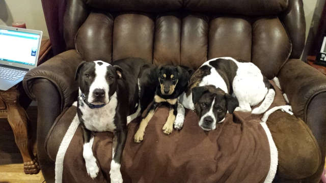 3-10-2015 - Harley, Penny & Bella