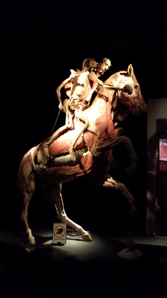 5-10-2015 - Body Worlds Exhibit 3