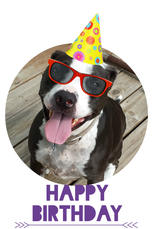 7-27-2014 - Harley's' 5th birthday picmonkeyed